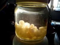 浸發 雙筴 雪蓮子 又名 皂角米