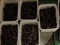 黑豆漿(國際牌壓力鍋、bianco調理機