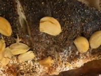 烤香蒜洋蔥鱸魚