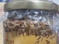 大茴香籽醋
