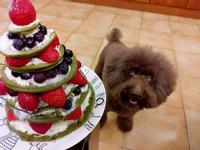 【幸福🍓抹茶鬆餅】耶誕樹🎄造型蛋糕