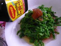 野菜過貓鮮品沙拉─美極鮮味露