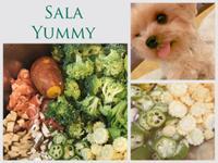 莎拉寵物鮮食-家庭日常花花輕盈餐