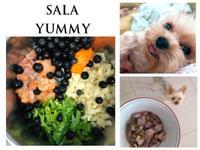 莎拉寵物鮮食-藍莓鮭魚薯丁增強免疫力餐