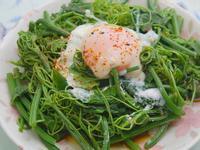 涼拌龍鬚菜