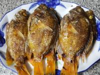 乾煎黃厚殼魚