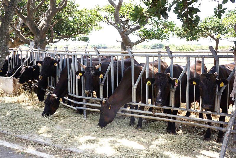 友善地球的新豬肉,植物肉零毫克膽固醇營養再加分!的第 1 張圖片
