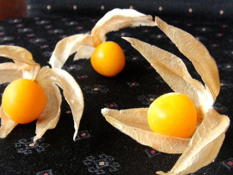 燈籠果 Gooseberry